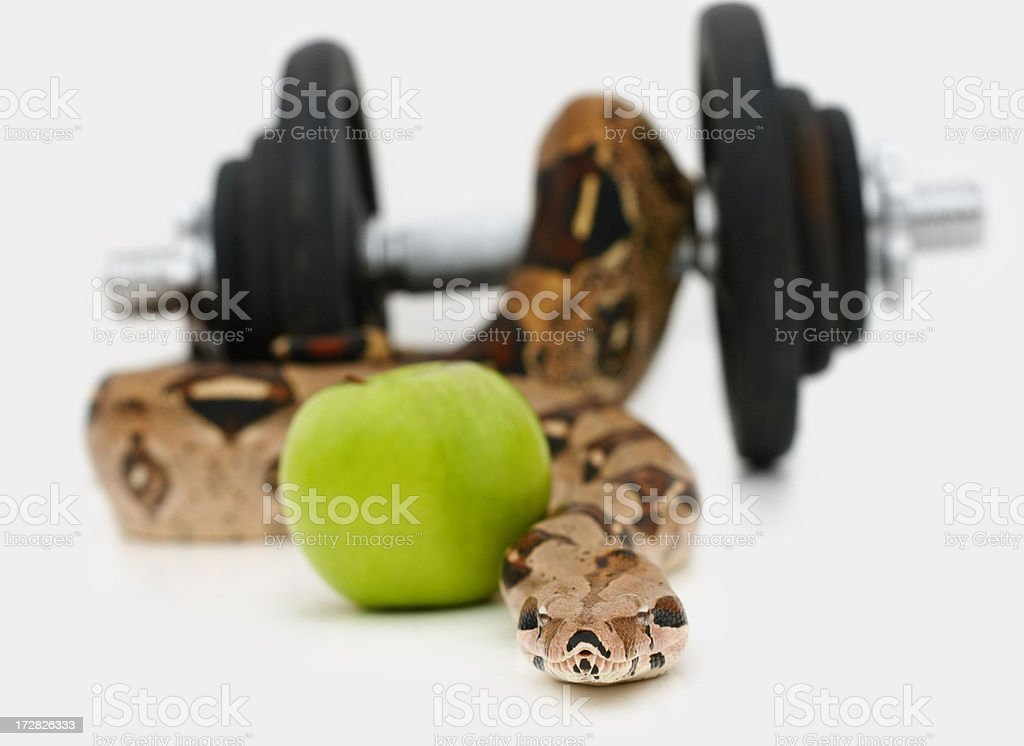 Python with a green apple and a dumbbell isolated against white stock photo
