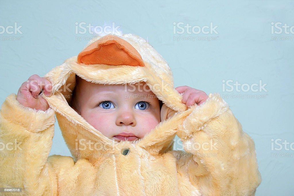 Quack, cluck stock photo