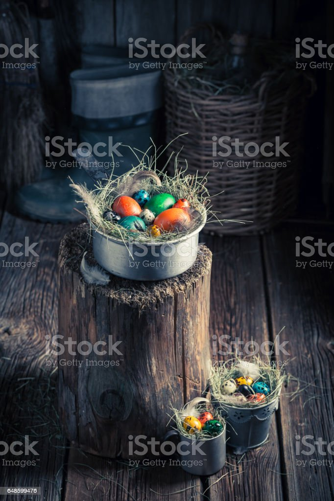 Quail and hen eggs for Easter with hay stock photo