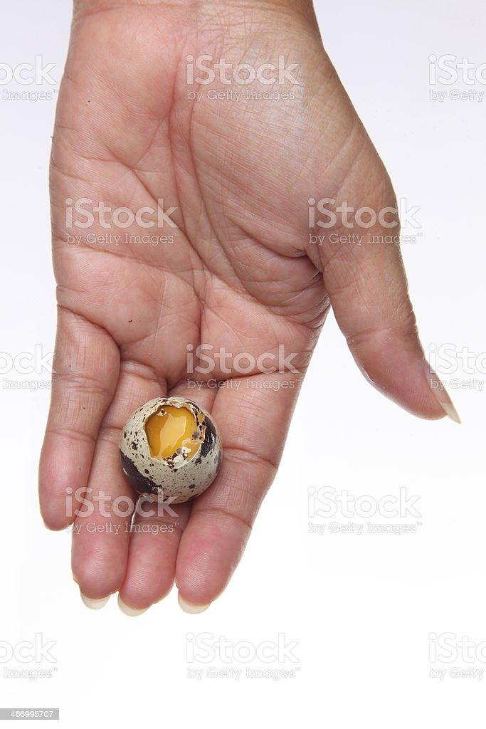 Quail egg broken in hand royalty-free stock photo