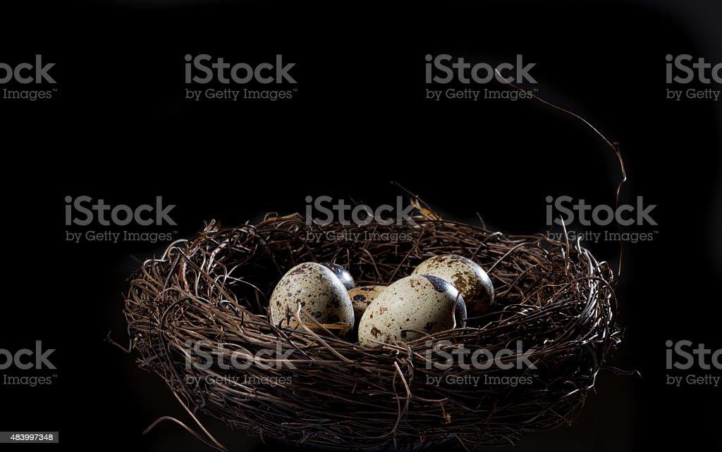 Quail Egg in the nest stock photo