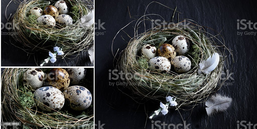 Quail Egg Montage stock photo