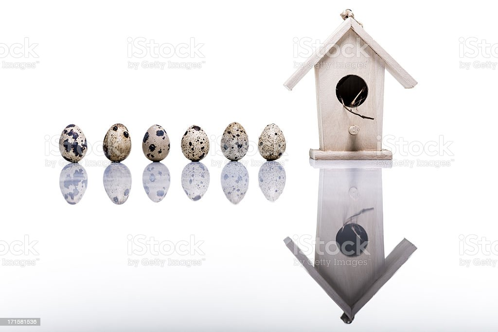 Quail eggs and bird house studio shot on white reflection stock photo