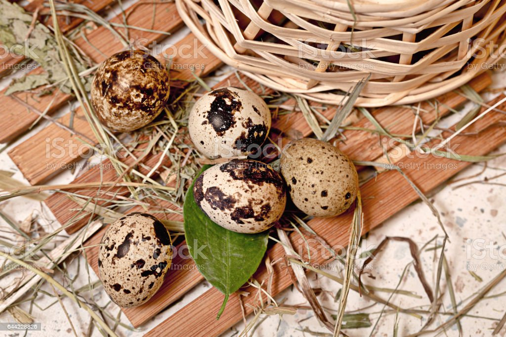 Quail eggs are in basket. stock photo