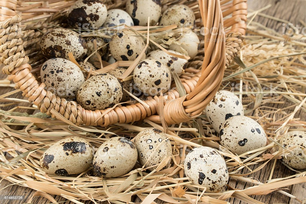 Quail eggs in a basket on old wooden table. stock photo