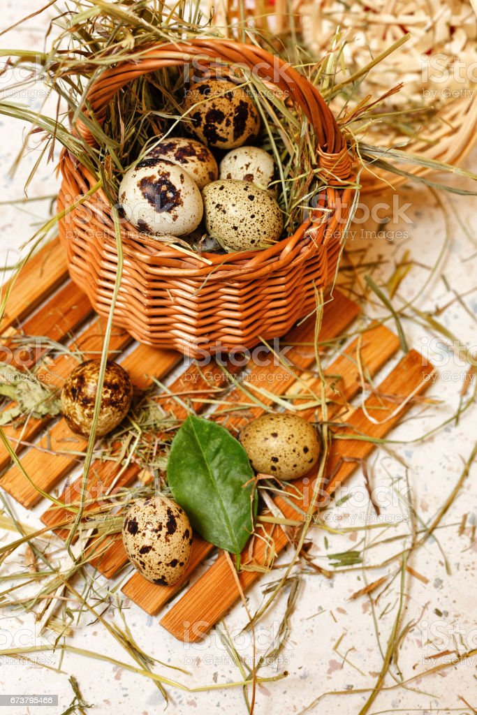 Quail eggs in basket. Protein diet. stock photo