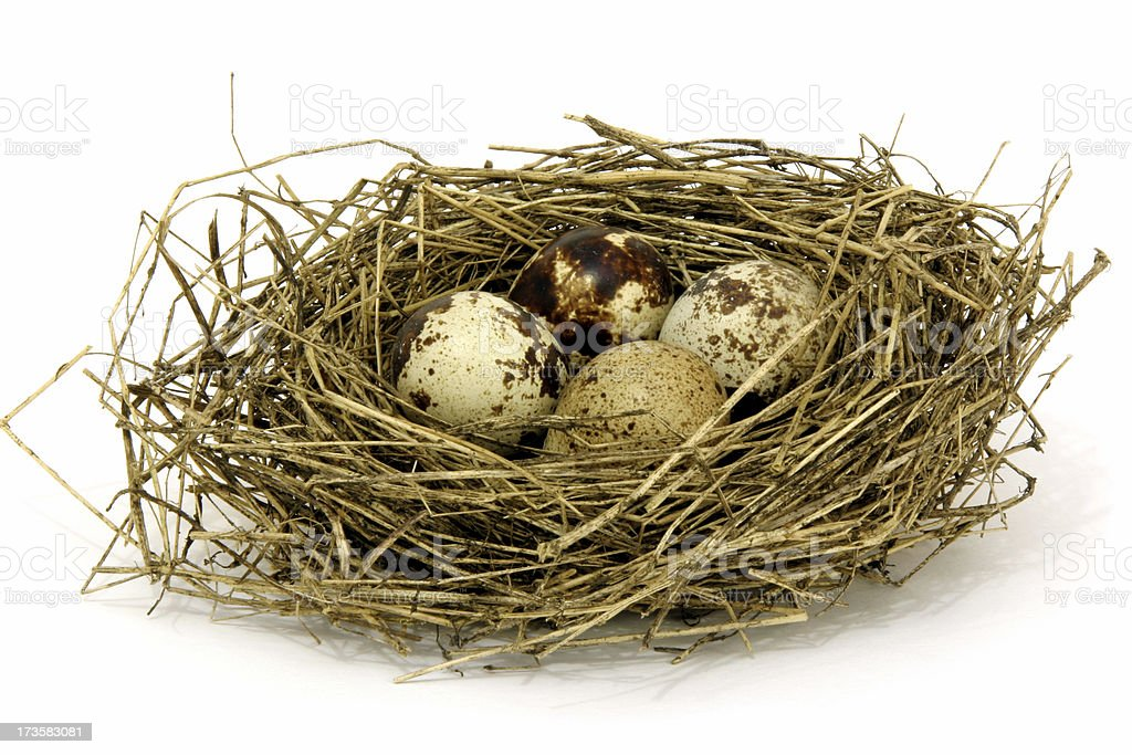 Quail eggs in the nest royalty-free stock photo