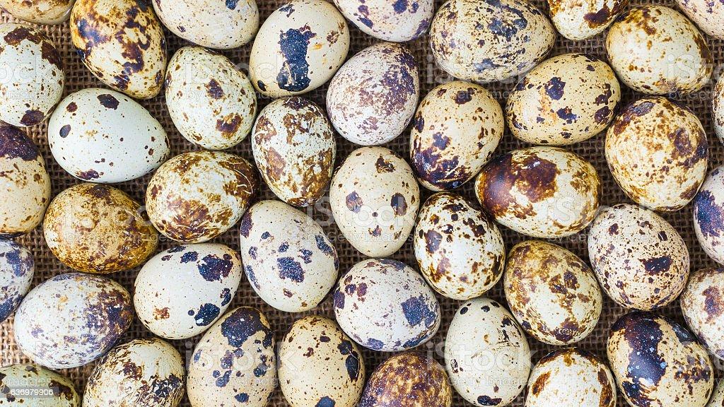Quail eggs on sackcloth stock photo