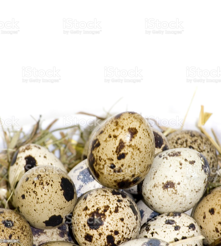 Quail eggs royalty-free stock photo