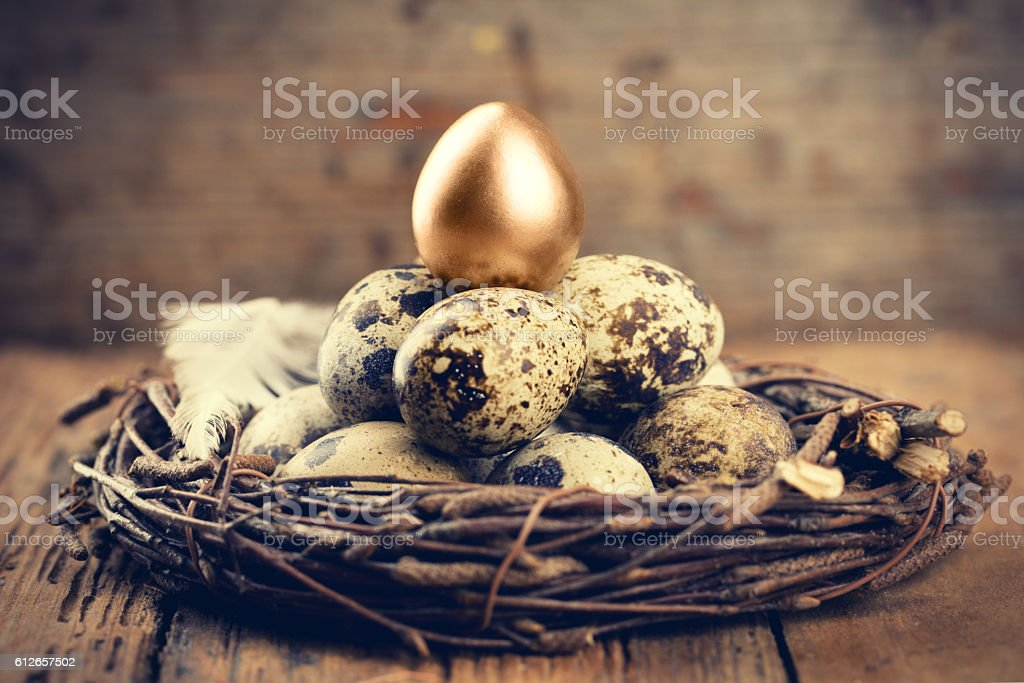 Quail Eggs with one gold stock photo