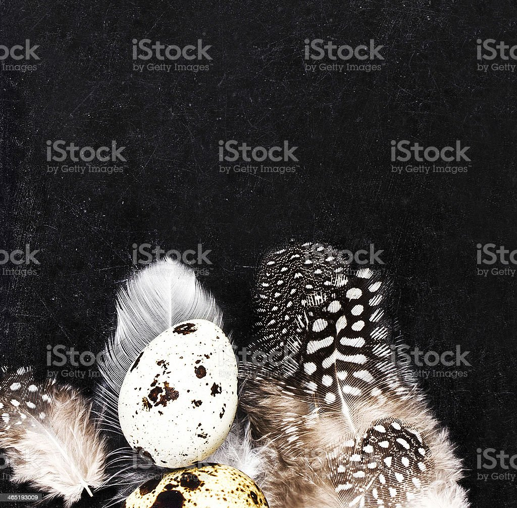 Quail eggs with white feathers on vintage black scratched background royalty-free stock photo