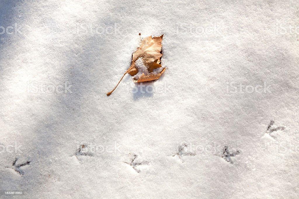 Quail Tracks in Snow royalty-free stock photo