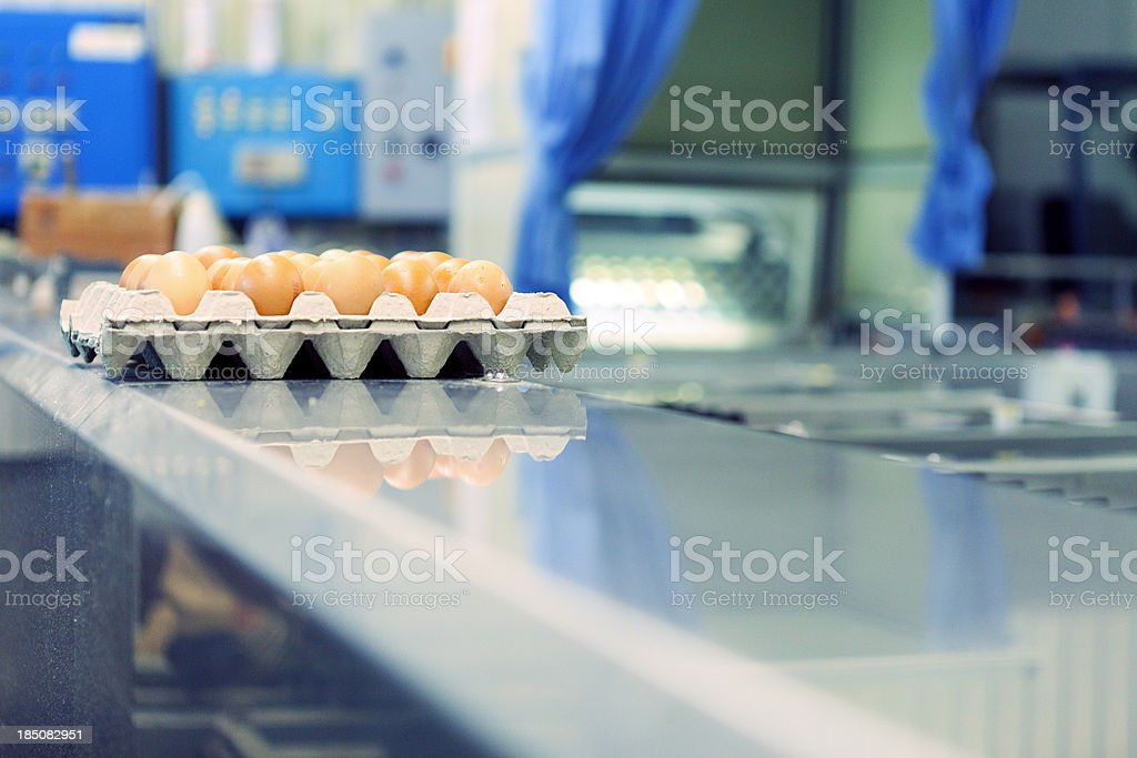 Quality control at egg production plant stock photo
