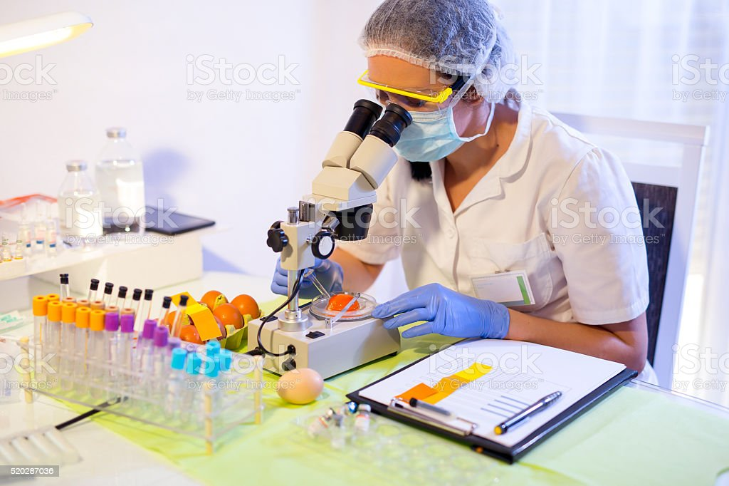 Quality control expert inspecting at chicken eggs in the laboratory stock photo