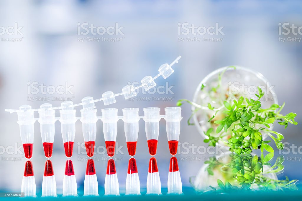Quality control of sprouts with DNA amplification test, stock photo