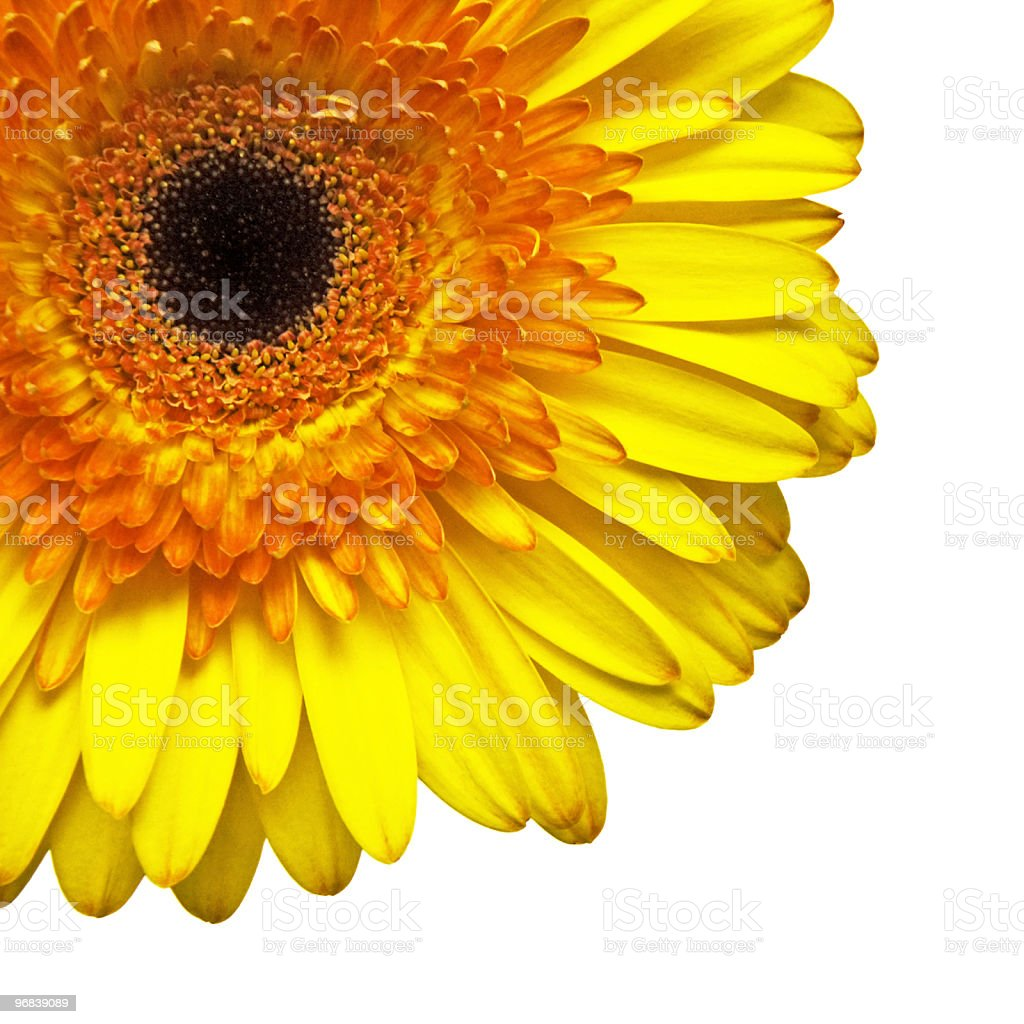 Quartier de yellow daisy photo libre de droits