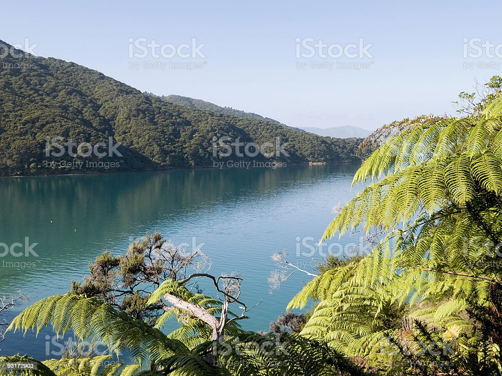 Queen Charlotte Sound, NZ stock photo