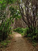 Queen Charlotte Track, Marlborough Sounds