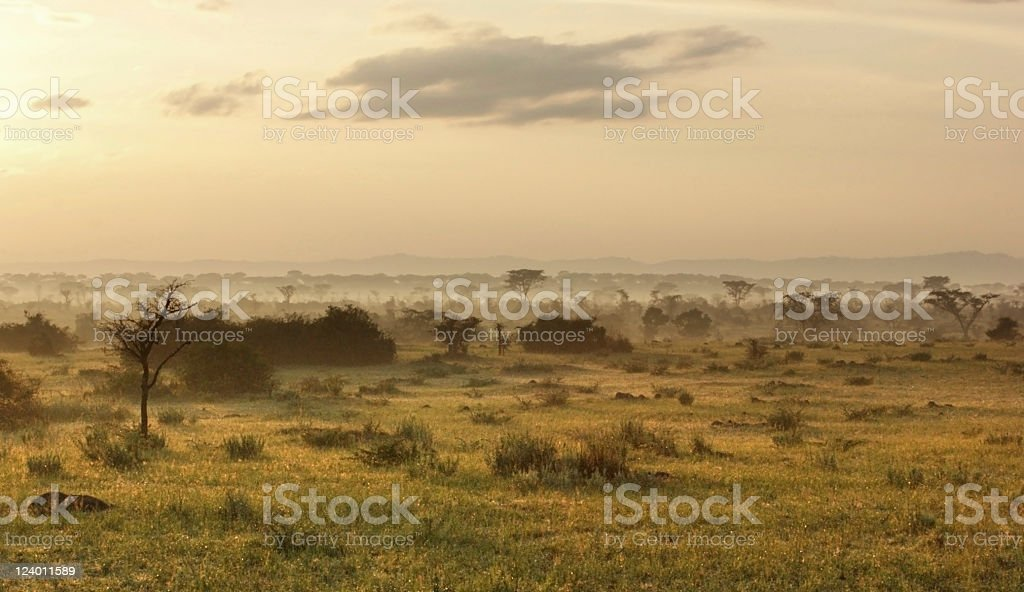 Queen Elizabeth National Park at evening time stock photo