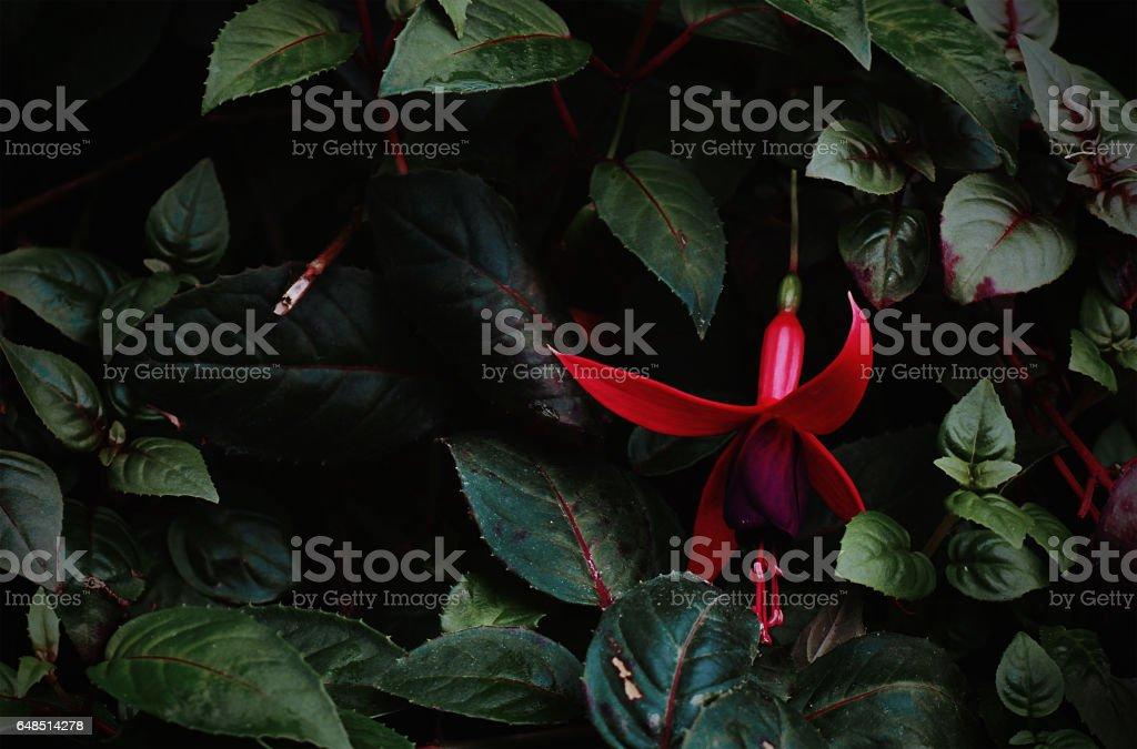 Queen flower stock photo