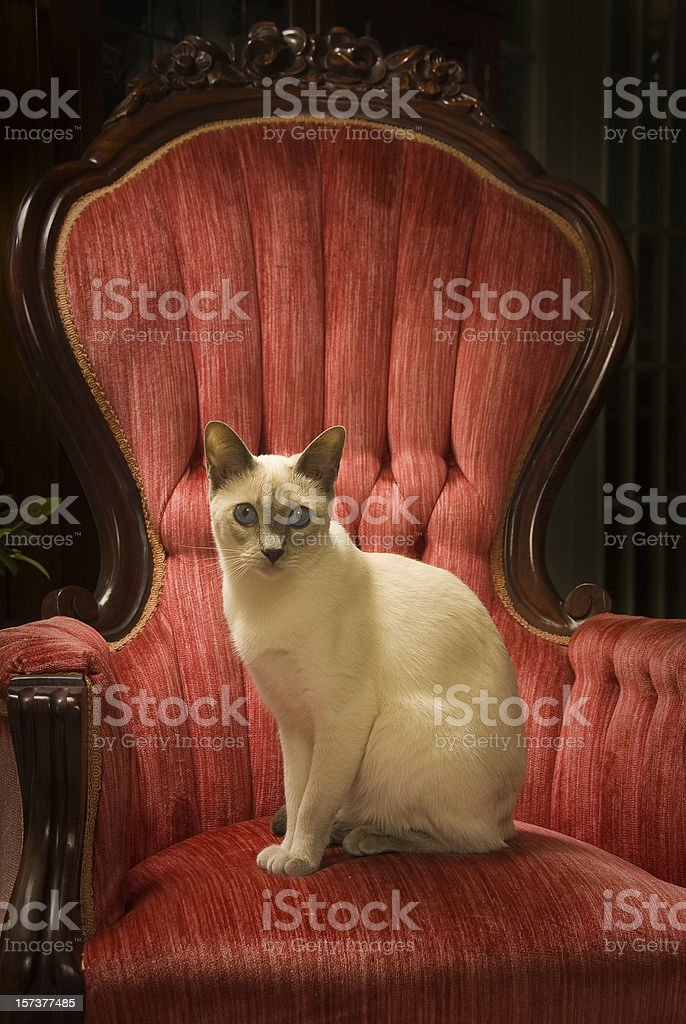 Queen on her Throne stock photo