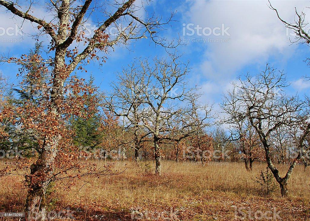 Quercy stock photo