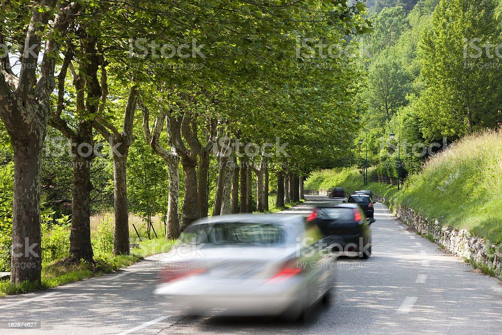 Queue of Cars Driving Through Tree Lined Road royalty-free stock photo