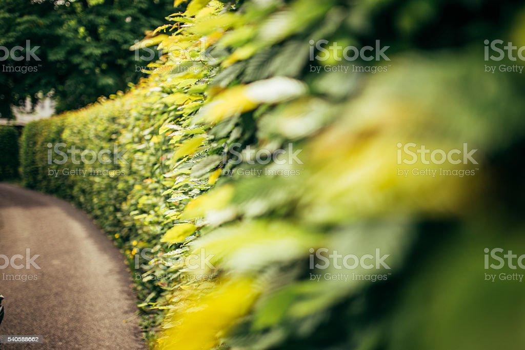 Quickset stock photo
