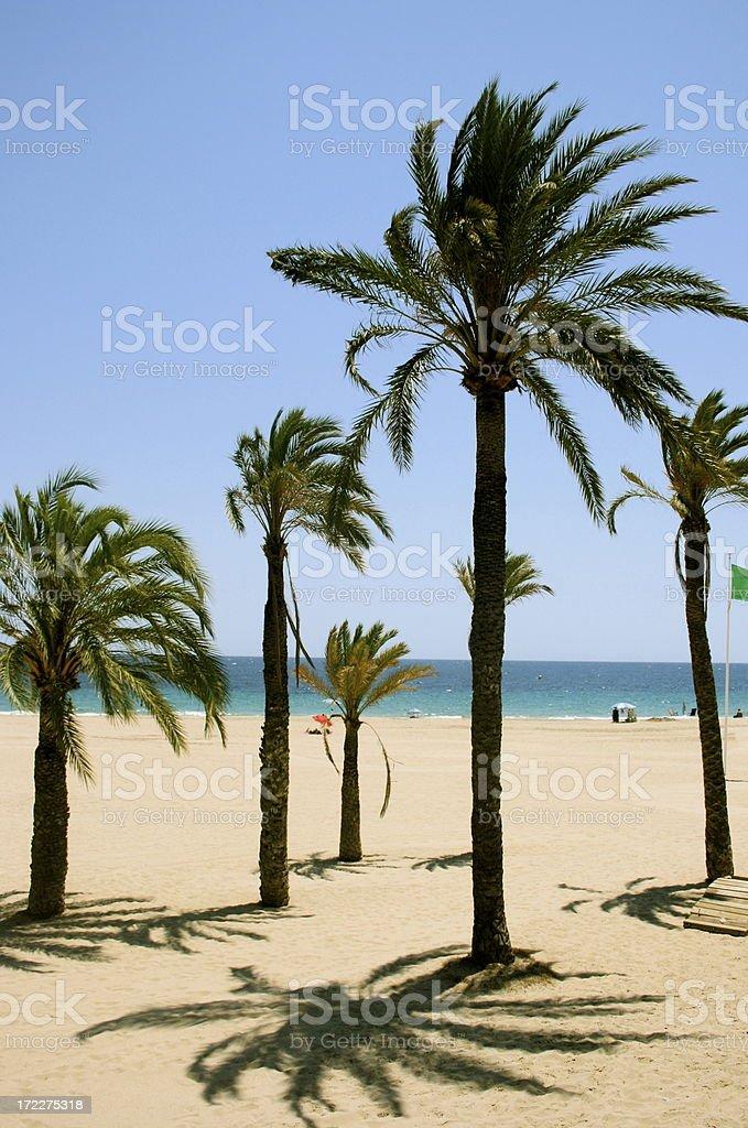 quiet beach with palms stock photo