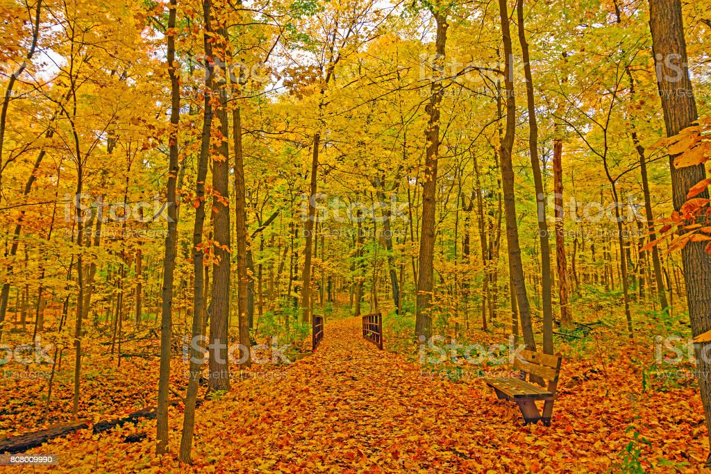Quiet Forest Path in the Fall stock photo