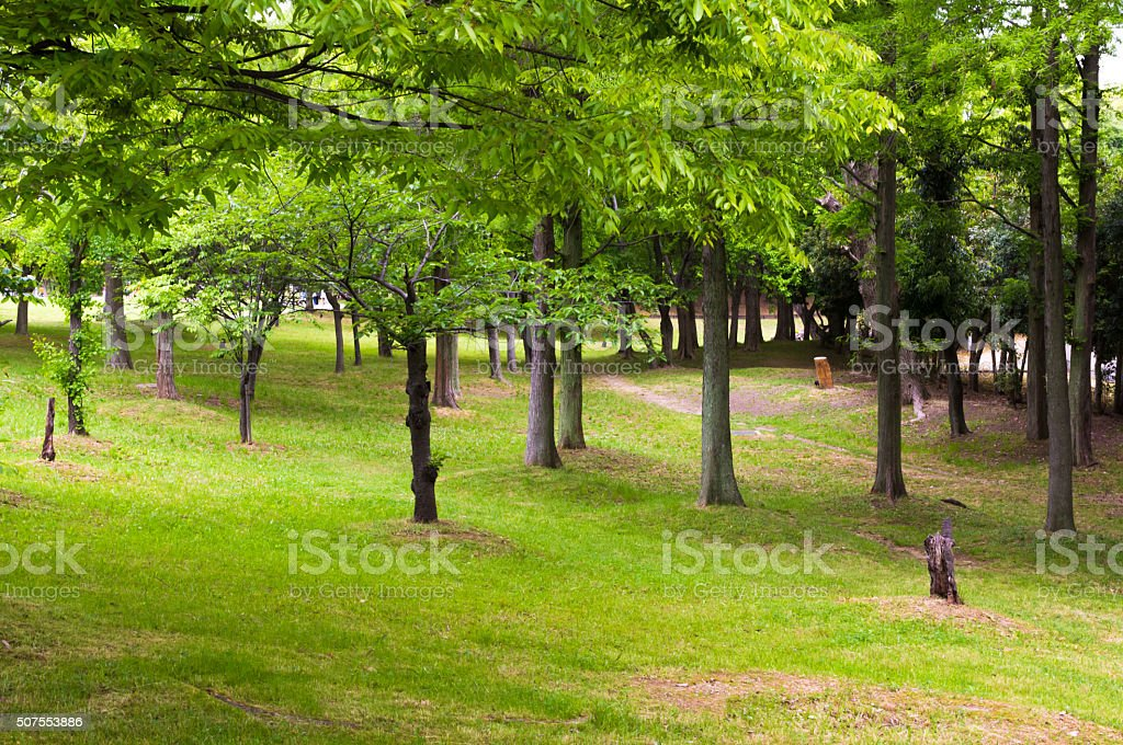 quiet green Park. stock photo