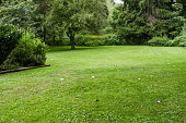 Quiet lawn with trees