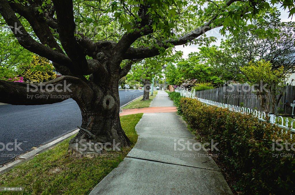 Quiet leafy residential street in Australia stock photo
