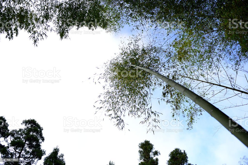 Quiet mountain bamboo stock photo