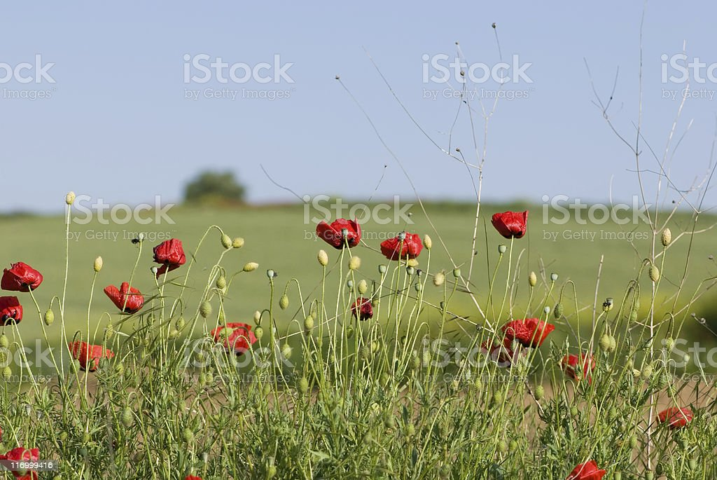 Quiet nature royalty-free stock photo