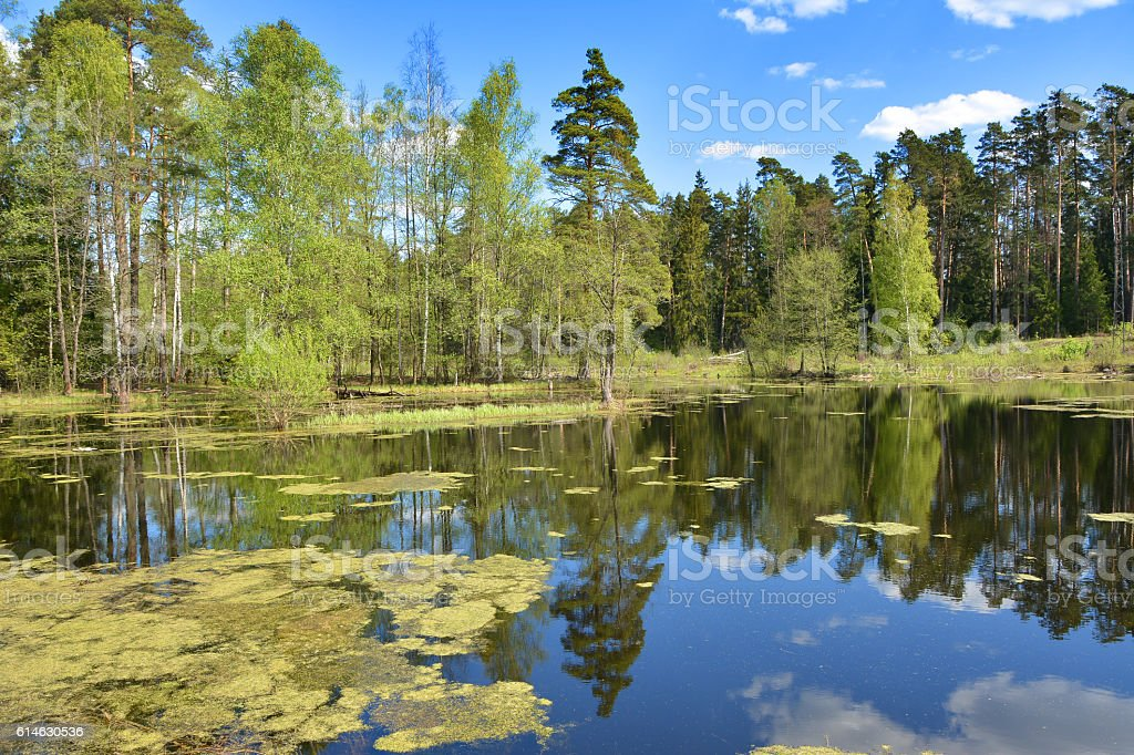 Quiet river backwater stock photo