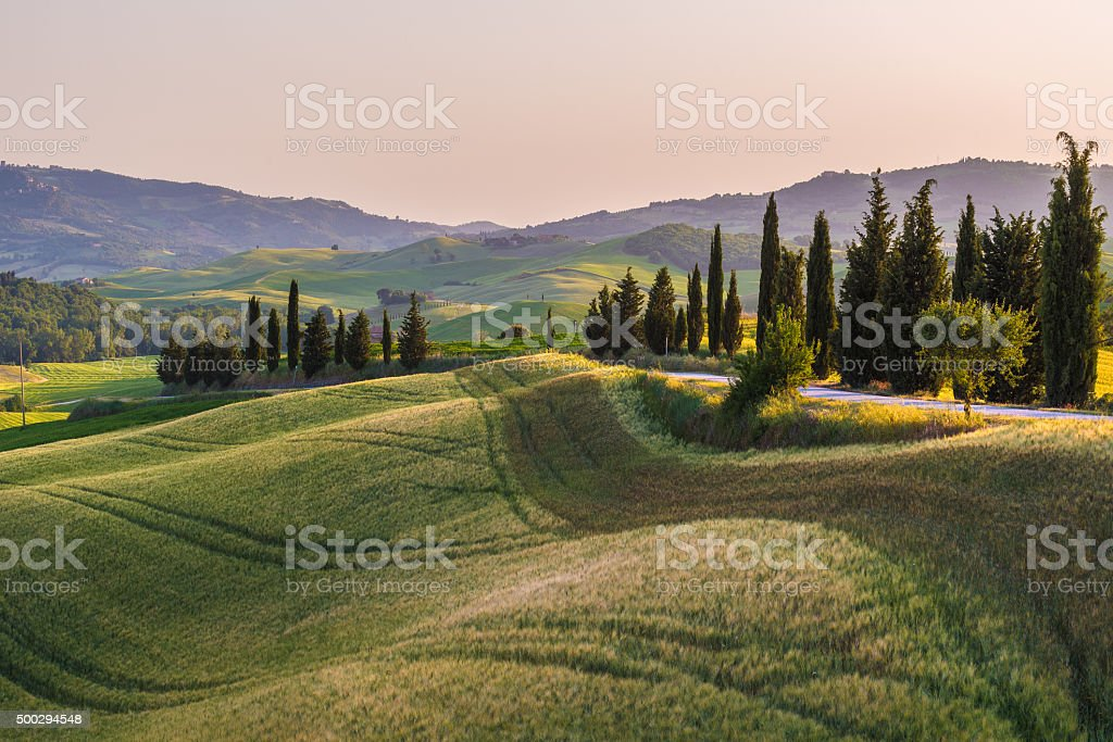 Quiet summer field in Tuscany stock photo