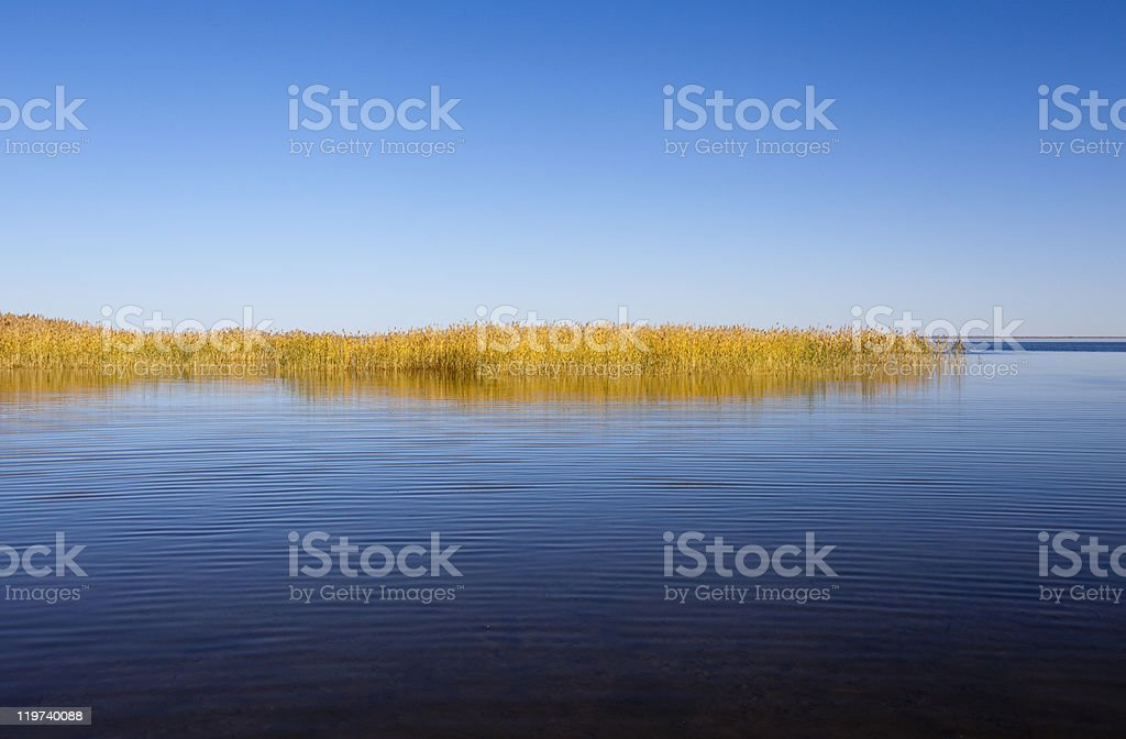 Quiet summer lake royalty-free stock photo