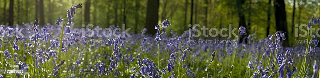 Quiet summer wild wood idyllic background royalty-free stock photo