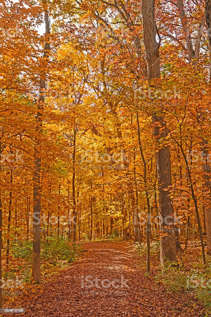 Quiet Trail in the Fall stock photo