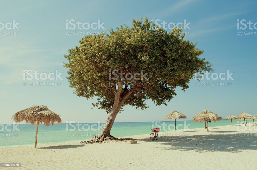 Quiet tropical beach with a tree stock photo
