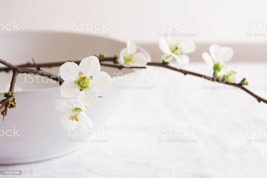 Quince branch with white flowers on white bowl on table stock photo