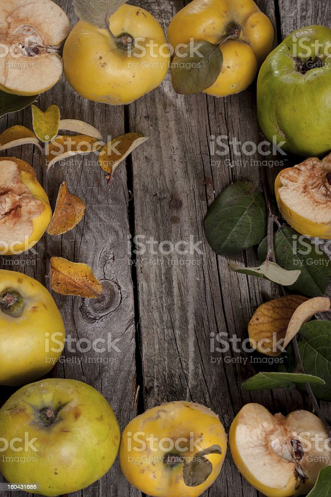 quince frame royalty-free stock photo