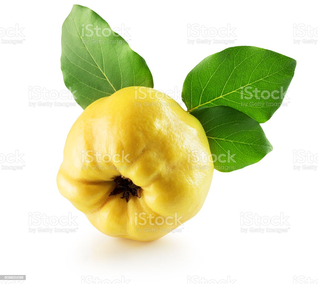 quince isolated on the white background stock photo