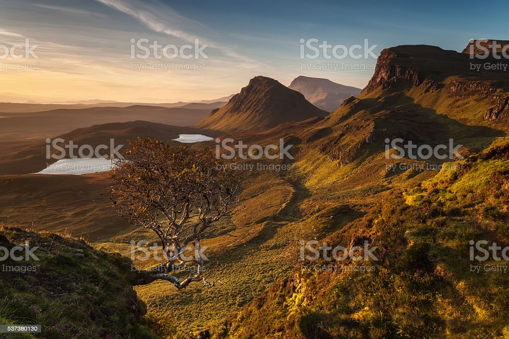 Quiraing tree stock photo