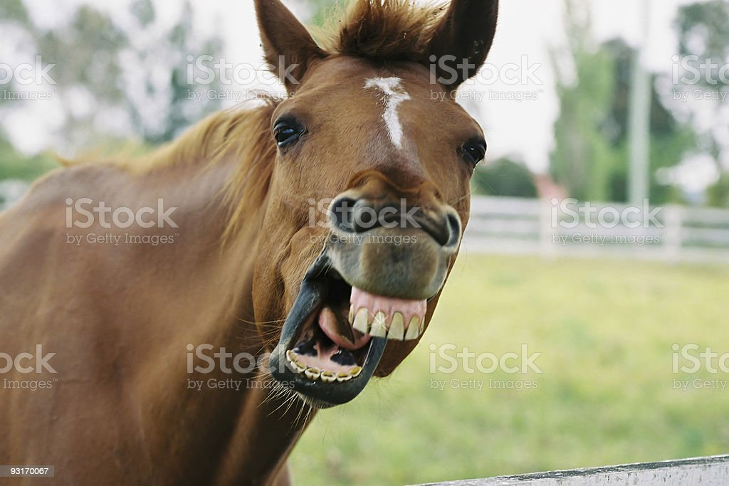 Quirky horse 2 stock photo