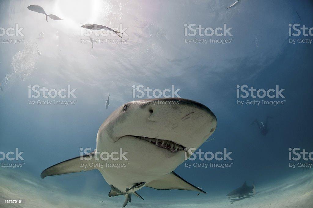 Quirky shark stock photo