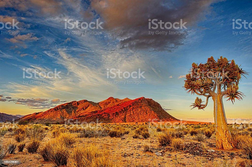Quiver tree at dusk stock photo