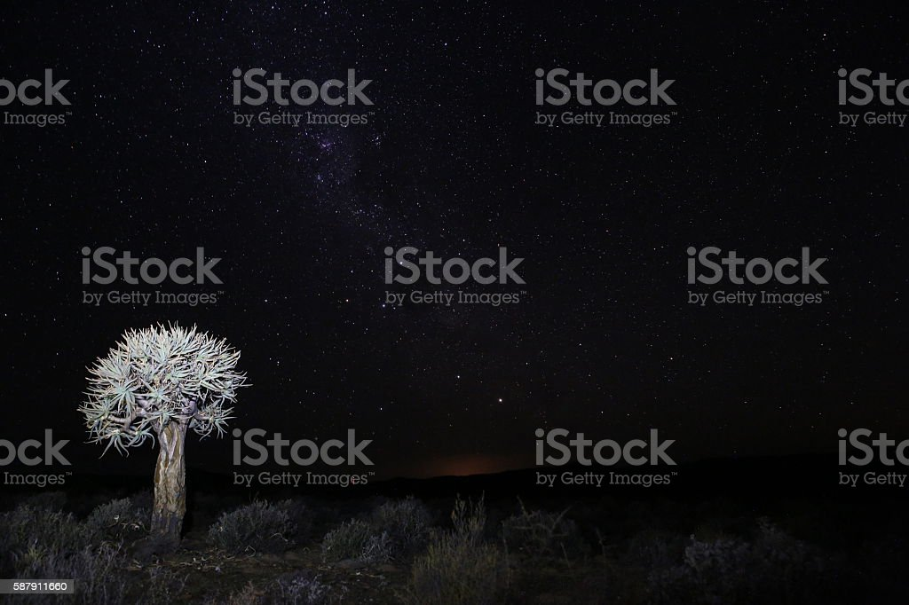 Quiver tree on farm at night in Hantam area stock photo