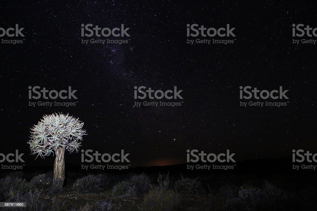 Quiver tree on farm at night in Hantam area stock photo